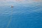 Ein Rettungsring schwimmt im Roten Meer.